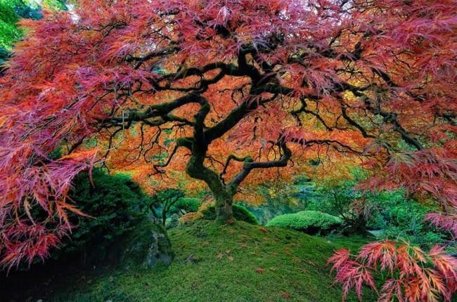 arbol-tenebroso-y-colorido