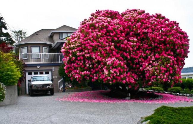 precioso-arbol-flores-rosas